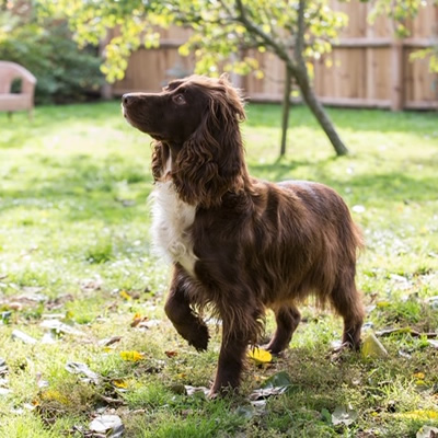 A Typical Sprocker